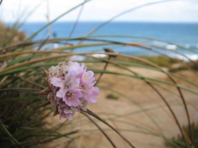 The flora around the beach is fairly minuscule in size but quite varied in color and type.